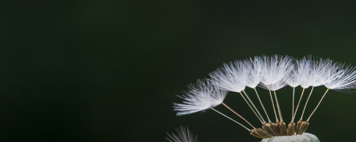 Bitcoin Developers Reveal Roadmap for 'Dandelion' Privacy Project